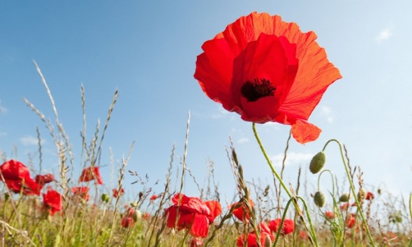 tall poppy syndrome and content marketing
